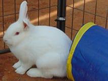 Άσπρο Bunny κουνέλι Στοκ φωτογραφία με δικαίωμα ελεύθερης χρήσης