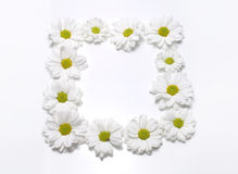 Άσπρο camomile πλαίσιο στο λευκό Στοκ Εικόνα