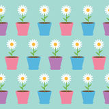 Άσπρο chamomile λουλούδι μαργαριτών στο δοχείο Camomile άνευ ραφής τυλίγοντας έγγραφο σχεδίων, υφαντικό πρότυπο πρόσκληση συγχαρη Στοκ φωτογραφία με δικαίωμα ελεύθερης χρήσης
