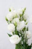 Άσπρο eustoma λουλουδιών Στοκ Εικόνα