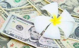 Άσπρο frangipani στα τραπεζογραμμάτια δολαρίων Στοκ Φωτογραφία