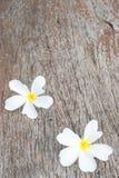 Άσπρο frangipani (plumeria) στο ξύλινο υπόβαθρο, εκλεκτική εστίαση Στοκ Φωτογραφία