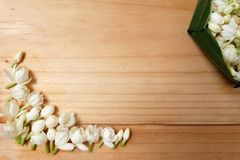 άσπρο jasmine νερό επιπλεόντων σωμάτων Στοκ Εικόνες