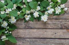 Άσπρο jasmine 01 Στοκ φωτογραφία με δικαίωμα ελεύθερης χρήσης