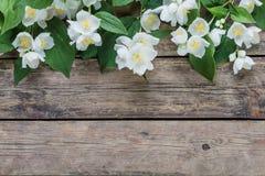 Άσπρο jasmine 02 Στοκ φωτογραφίες με δικαίωμα ελεύθερης χρήσης