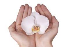 Άσπρο orchid λουλούδι ομαλά χέρια Στοκ φωτογραφία με δικαίωμα ελεύθερης χρήσης