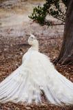 Άσπρο peacock που κοιτάζει πέρα από τον ώμο Στοκ φωτογραφία με δικαίωμα ελεύθερης χρήσης