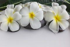 Άσπρο plumeria ή frangipani λουλουδιών στον άσπρους δίσκο και το νερό Στοκ Εικόνες