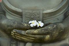 Άσπρο plumeria σε ετοιμότητα του Βούδα Στοκ φωτογραφίες με δικαίωμα ελεύθερης χρήσης