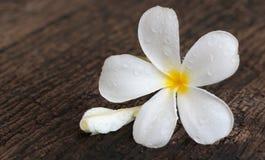 Άσπρο Plumeria στο ξύλινο υπόβαθρο Στοκ φωτογραφία με δικαίωμα ελεύθερης χρήσης