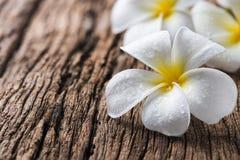 Άσπρο Plumeria στο ξύλινο υπόβαθρο Στοκ Φωτογραφίες