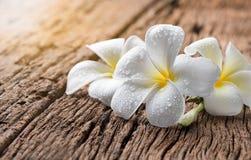 Άσπρο Plumeria στο ξύλινο υπόβαθρο Στοκ εικόνες με δικαίωμα ελεύθερης χρήσης