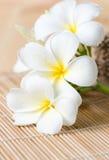 Άσπρο Plumeria στο ξύλινο χαλί μπαμπού Στοκ Φωτογραφίες