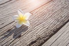 Άσπρο Plumeria στο παλαιό ξύλινο πάτωμα Στοκ Φωτογραφίες