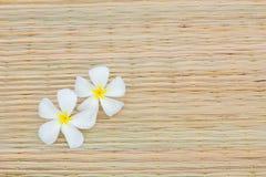 Άσπρο plumeria Στοκ Φωτογραφίες