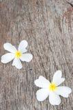 Άσπρο plumeria (frangipani) στο ξύλινο υπόβαθρο, εκλεκτική εστίαση Στοκ εικόνες με δικαίωμα ελεύθερης χρήσης