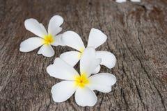 Άσπρο plumeria (frangipani) στο ξύλινο υπόβαθρο, εκλεκτική εστίαση Στοκ Εικόνες