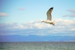 Άσπρο seagull που πετά επάνω από την επιφάνεια νερού με τη θάλασσα και το υπόβαθρο σύννεφων Στοκ φωτογραφία με δικαίωμα ελεύθερης χρήσης