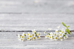 Άσπρο spirea γκρίζο στο ξύλινο υπόβαθρο Εκλεκτική εστίαση διάστημα αντιγράφων στοκ εικόνες με δικαίωμα ελεύθερης χρήσης