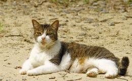 Άσσος η γάτα Στοκ φωτογραφία με δικαίωμα ελεύθερης χρήσης