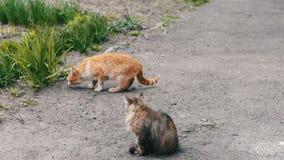 Άστεγες γάτες πριν στη χλόη φιλμ μικρού μήκους