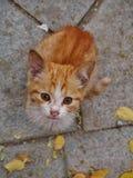 Άστεγη γάτα πιπεροριζών στην οδό Στοκ Εικόνες