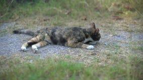 Άστεγη γάτα στο έδαφος στο πάρκο φιλμ μικρού μήκους