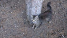 Άστεγη γκρίζα γάτα που περπατά κοντά σε ένα δέντρο στο πάρκο φιλμ μικρού μήκους