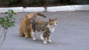 Άστεγη κόκκινη γάτα Μαρτίου και τρεις-χρωματισμένη γάτα στο πάρκο πόλεων απόθεμα βίντεο