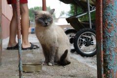 Άστεγη λυπημένη γάτα στην οδό πόλεων κοντά στο σπίτι Φωτογραφία του άστεγου ζώου στοκ φωτογραφίες