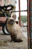 Άστεγη λυπημένη γάτα στην οδό πόλεων κοντά στο σπίτι Φωτογραφία του άστεγου ζώου στοκ εικόνα