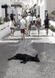 άστεγη οδός σκυλιών Στοκ εικόνες με δικαίωμα ελεύθερης χρήσης