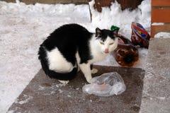Άστεγη πεινασμένη λυπημένη γάτα στην οδό πόλεων κοντά στα σκαλοπάτια Φωτογραφία του άστεγου ζώου στοκ εικόνες