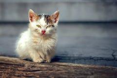 Άστεγοι λίγη γάτα Στοκ εικόνες με δικαίωμα ελεύθερης χρήσης