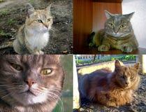 Άστεγοι και εσωτερικές γάτες Στοκ εικόνες με δικαίωμα ελεύθερης χρήσης