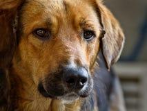 άστεγοι σκυλιών Στοκ εικόνα με δικαίωμα ελεύθερης χρήσης
