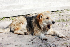 άστεγοι σκυλιών Στοκ εικόνες με δικαίωμα ελεύθερης χρήσης