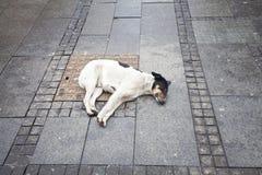 άστεγοι σκυλιών Στοκ Φωτογραφίες