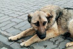 άστεγοι σκυλιών Στοκ Φωτογραφία