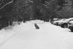 άστεγοι σκυλιών pets Τα σκυλιά περπατούν στην οδό Το σκυλί έχει χάσει τον ιδιοκτήτη του στοκ φωτογραφία