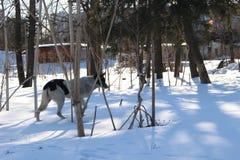 άστεγοι σκυλιών pets Τα σκυλιά περπατούν στην οδό Το σκυλί έχει χάσει τον ιδιοκτήτη του στοκ φωτογραφίες