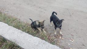 άστεγοι σκυλιών pets Τα σκυλιά περπατούν στην οδό Το σκυλί έχει χάσει τον ιδιοκτήτη του στοκ εικόνες με δικαίωμα ελεύθερης χρήσης