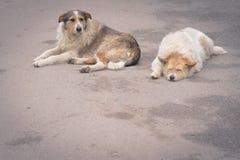 άστεγοι δύο σκυλιών Στοκ εικόνες με δικαίωμα ελεύθερης χρήσης