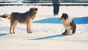 Άστεγος χειμώνας δύο σκυλιών ψυχρά άστεγο πρόβλημα κατοικίδιων ζώων ζώων Μικρό γραπτό σκυλί στον τρόπο ζωής το χιόνι απόθεμα βίντεο