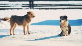Άστεγος χειμώνας δύο σκυλιών ψυχρά άστεγο πρόβλημα κατοικίδιων ζώων ζώων μικρό γραπτό σκυλί στον τρόπο ζωής χιονιού απόθεμα βίντεο