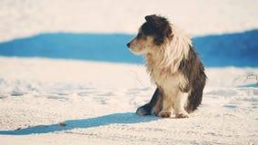 Άστεγος χειμώνας σκυλιών ψυχρά άστεγο πρόβλημα κατοικίδιων ζώων ζώων μικρό γραπτό σκυλί στον τρόπο ζωής χιονιού απόθεμα βίντεο
