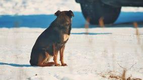 Άστεγος χειμώνας σκυλιών ψυχρά άστεγο πρόβλημα κατοικίδιων ζώων ζώων καφετί σκυλί στον τρόπο ζωής χιονιού απόθεμα βίντεο
