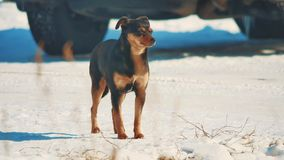 Άστεγος χειμώνας σκυλιών ψυχρά άστεγο πρόβλημα κατοικίδιων ζώων ζώων καφετί σκυλί στον τρόπο ζωής το χιόνι φιλμ μικρού μήκους