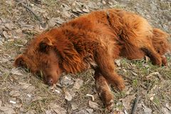 άστεγος ύπνος σκυλιών στοκ φωτογραφία με δικαίωμα ελεύθερης χρήσης