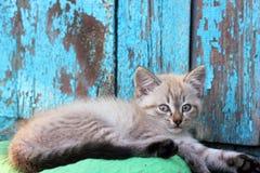 άστεγο γατάκι μικρό Στοκ εικόνα με δικαίωμα ελεύθερης χρήσης